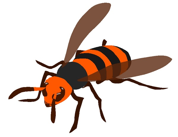 スズメバチの画像 p1_8